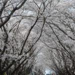 海外移住者が日本を恋しくなる瞬間とは?