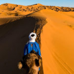 ヨーロッパ横断旅行記77 サハラ砂漠のラクダツアーに参加することにする