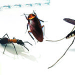 海外移住日記第145話 一人暮らしをする予定がきづけば虫との共同生活